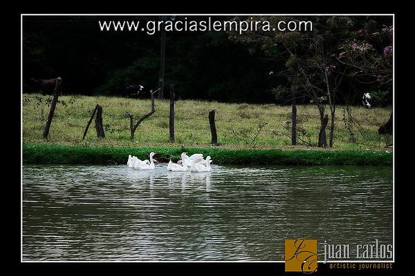 Villa-de-Adas-Gracias-Lempira-00008